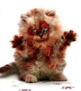 Zombie Kitten  from Texas Toyz,  Corpus Christi, TX